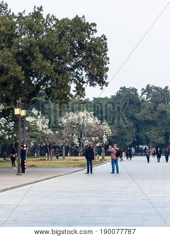 Visitors Take Photos Of Blossoming Trees