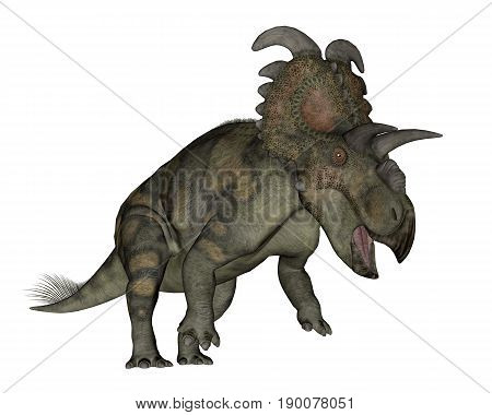 Albertaceratops dinosaur roaring isolated in white background - 3D render