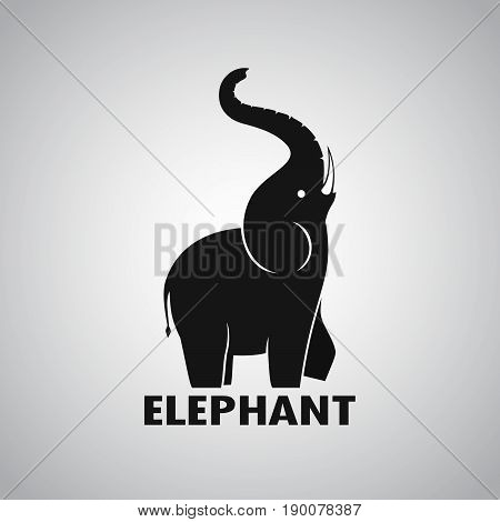 Vector of an Elephant design on a white background