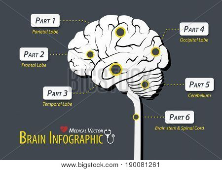 The Brain infographic . Flat design .