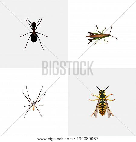 Realistic Spider, Locust, Ant And Other Vector Elements. Set Of Insect Realistic Symbols Also Includes Grasshopper, Bug, Arachnid Objects.