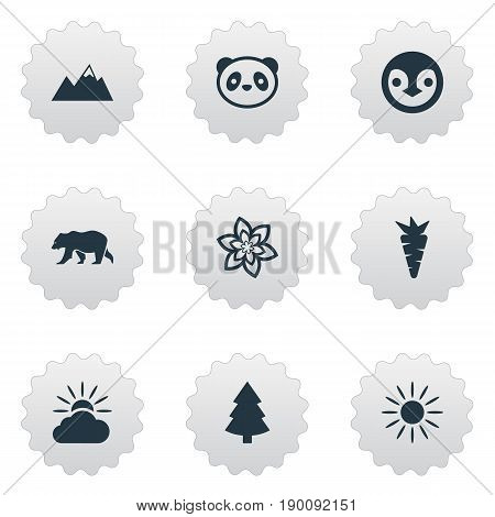 Vector Illustration Set Of Simple Geo Icons. Elements Bear, Diver, Pinnacle And Other Synonyms Penguin, Carrot And Shine.