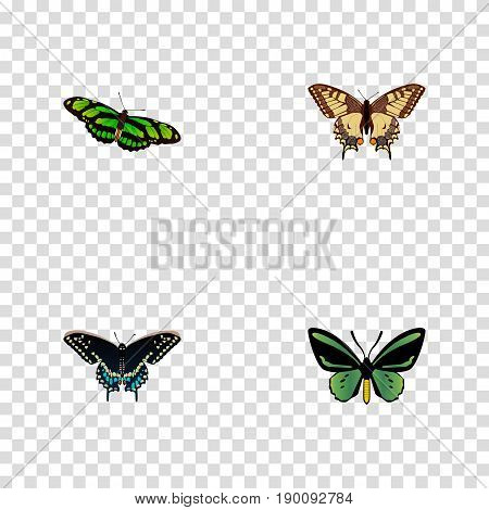 Realistic Morpho Hecuba, Tiger Swallowtail, Tropical Moth And Other Vector Elements. Set Of Beauty Realistic Symbols Also Includes Moth, Green, Butterfly Objects.