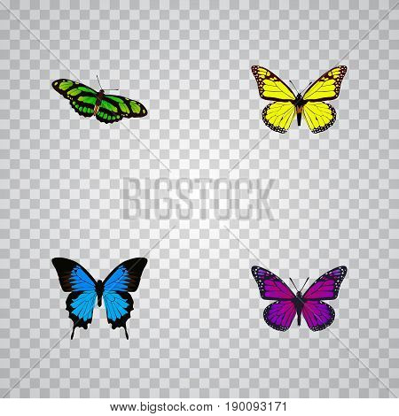 Realistic Archippus, Purple Monarch, Green Peacock And Other Vector Elements. Set Of Butterfly Realistic Symbols Also Includes Cypris, Green, Purple Objects.