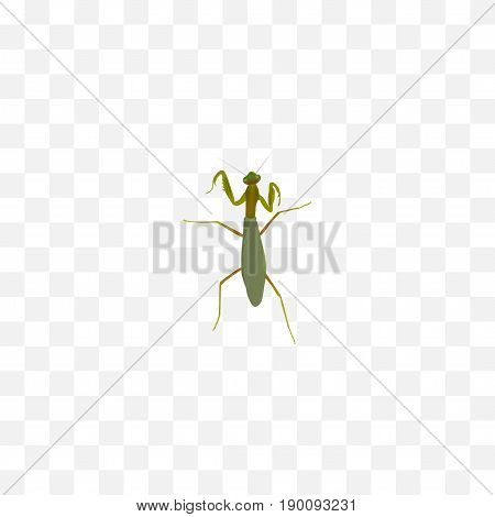 Realistic Mantis Element. Vector Illustration Of Realistic Grasshopper Isolated On Clean Background. Can Be Used As Grasshopper, Mantis And Locust Symbols.