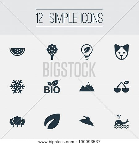 Vector Illustration Set Of Simple Ecology Icons. Elements Berry, Green Power, Forest And Other Synonyms Cantaloupe, Snowflake And Enviroment.