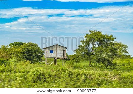 Meadow tropical scene with traditional cane house construction located in Guayas district Ecuador