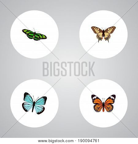 Realistic Monarch, Tiger Swallowtail, Lexias And Other Vector Elements. Set Of Butterfly Realistic Symbols Also Includes Butterfly, Monarch, Sky Objects.