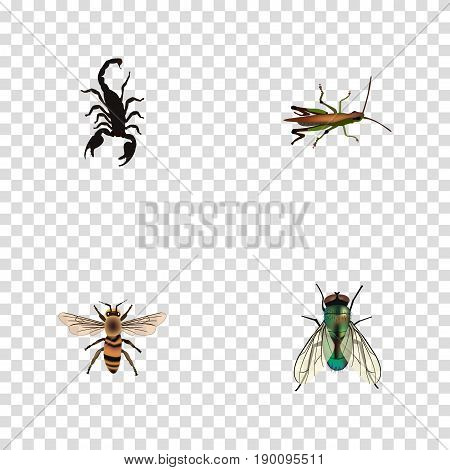 Realistic Wasp, Locust, Poisonous And Other Vector Elements. Set Of Bug Realistic Symbols Also Includes Beetle, Housefly, Locust Objects.