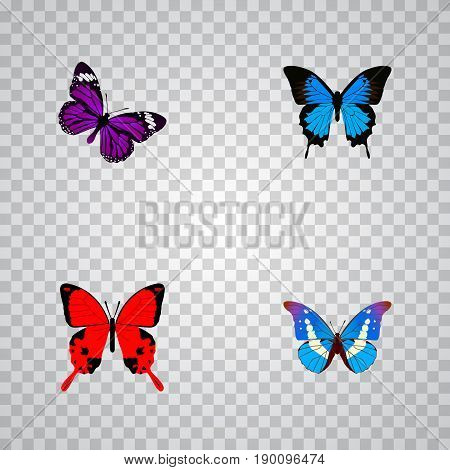 Realistic Sangaris, Bluewing, Butterfly And Other Vector Elements. Set Of Butterfly Realistic Symbols Also Includes Blue, Cypris, Purple Objects.