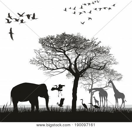 Vector illustration of a safari with giraffes, herons, geese and elephant