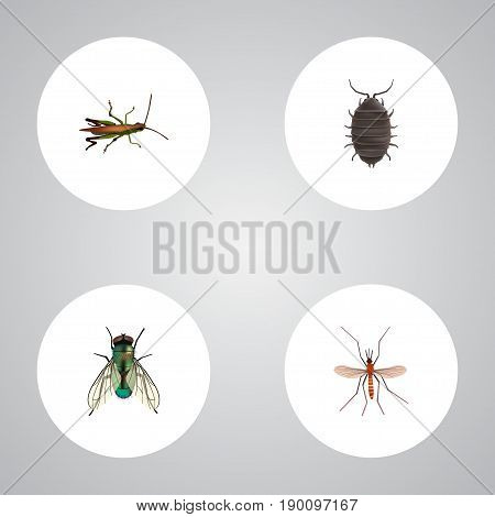 Realistic Housefly, Gnat, Dor And Other Vector Elements. Set Of  Realistic Symbols Also Includes Alive, Locust, Beetle Objects.