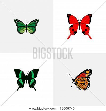 Realistic Beauty Fly, Milkweed, Sangaris And Other Vector Elements. Set Of Butterfly Realistic Symbols Also Includes Malachite, Tropical, Fly Objects.