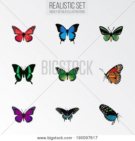 Realistic Milkweed, Tropical Moth, Common Blue And Other Vector Elements. Set Of Beauty Realistic Symbols Also Includes Bluewing, Fly, Malachite Objects.