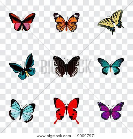 Realistic Lexias, Checkerspot, Monarch And Other Vector Elements. Set Of Beauty Realistic Symbols Also Includes Blue, Butterfly, Orange Objects.