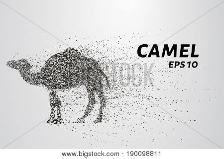 Camel Of The Particles. Camel Consists Of Circles And Points. Vector Illustration.