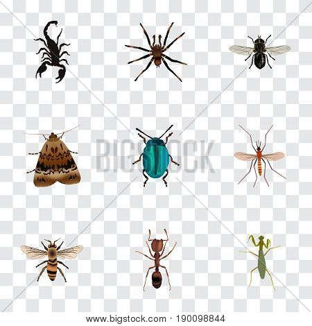 Realistic Midge, Bug, Butterfly And Other Vector Elements. Set Of Insect Realistic Symbols Also Includes Mantis, Bug, Grasshopper Objects.