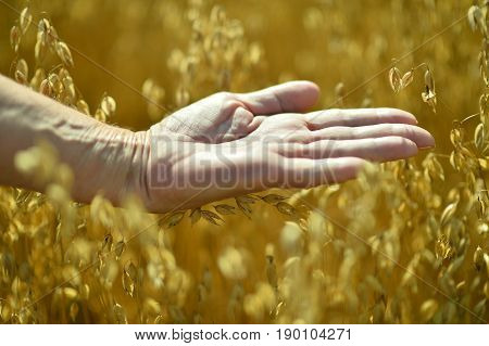 Close up view of senior man holding opened palm against field of ripe wheat
