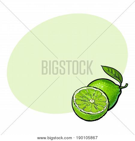 Whole and half unpeeled ripe green lime, sketch style vector illustration with space for text. Hand drawn whole and sliced juicy lime fruit with fresh green leaf