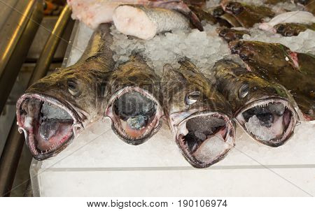 Hake fish for sale on fishmongers stall at Brighton Beach East Sussex England