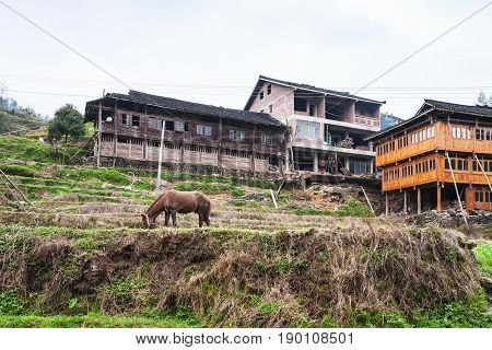 Horse On Terraced Garden And Houses In Dazhai