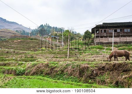 Horse On Terraced Fields And Houses In Dazhai
