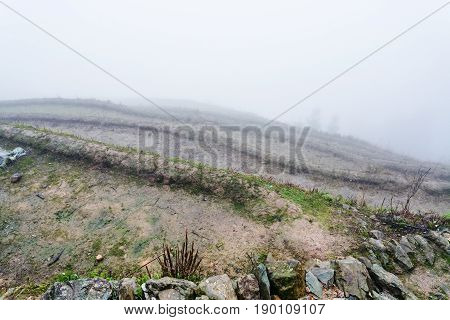 Mist Over Wet Terraced Fieilds On Hill Slope