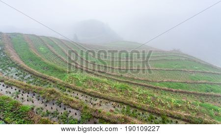 Fog Over Rice Terraced Fieilds