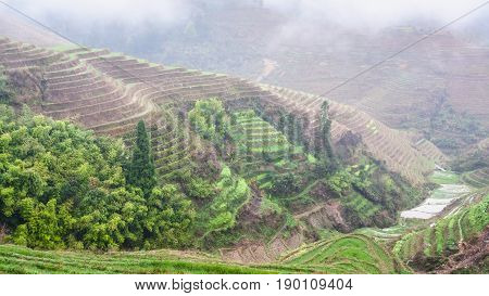 View Of Terraced Rice Gardens Over Haze