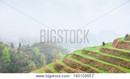 Above View Of Terraced Plantations On Hills