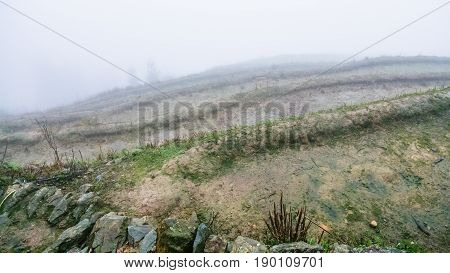 Fog Over Wet Terraced Fieilds On Hill Slope