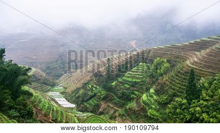 View Of Terraced Rice Gardens Over Clouds