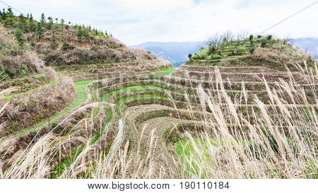Rice Field On Terraced Hill In Dazhai Country