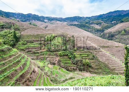 Terraced Fields Near Dazhai Village In Country