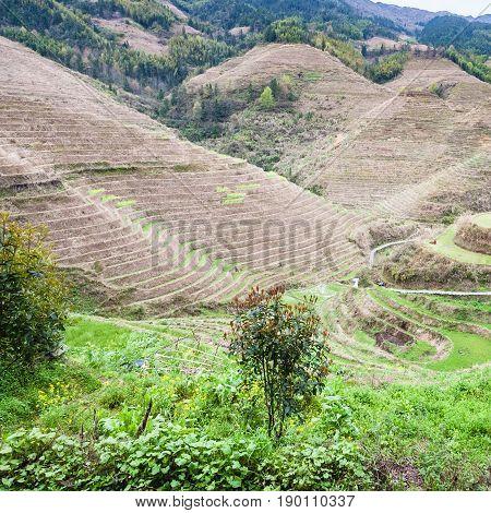 Green Gardens Near Dazhai Village In Country