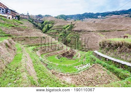 View Of Terraced Gardens In Dazhai Village