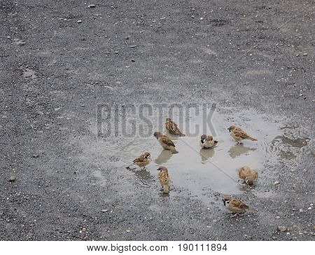 little birds play together at their small pond which is look like their oasis. After raining moment in the Ueno park, Tokyo, Japan.