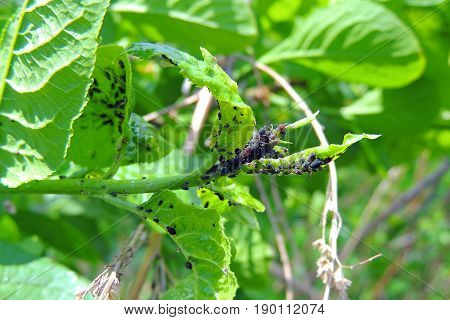 Nasty Bugs On The Leaves