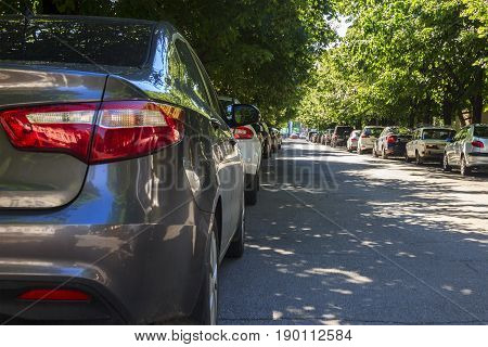 Two long lines of cars under sprawling green crowns on the city street. Armavir Krasnodar Krai.