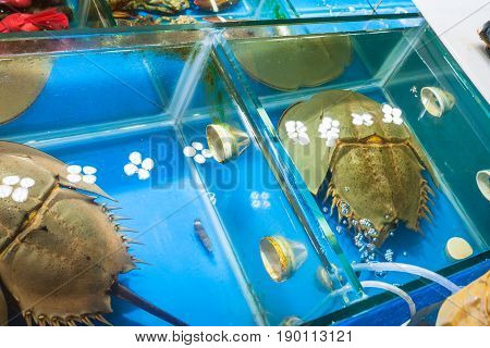 Horseshoe Crabs In Market In Guangzhou City
