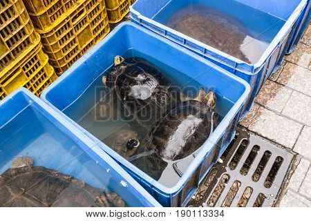 Turtles In Boxes In Fish Market In Guangzhou City