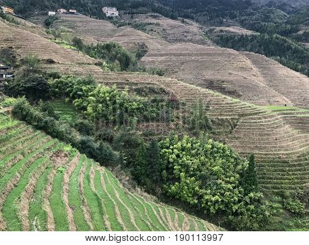 View Of Terraced Paddy Area In Dazhai Village