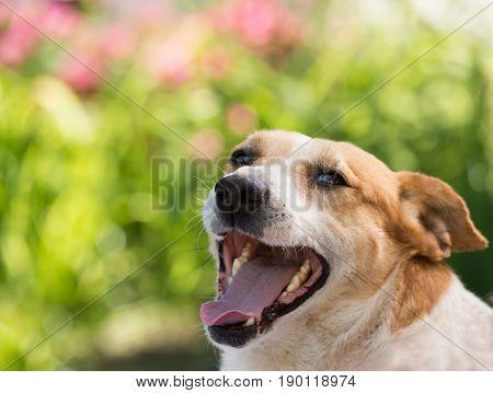 Cute Dog Panting In Garden