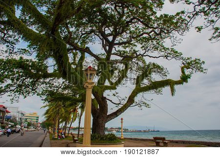 Waterfront With Beautiful Trees In Cloudy Weather. Dumaguete, Philippines