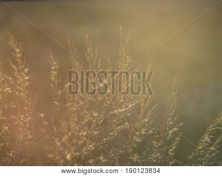 long grass and flares from sunlight at sundown