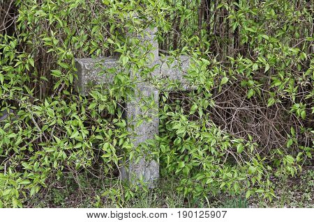 An old nameless cross in a cemetery overgrown with shrubs