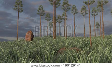 3d rendering of the pine-trees grove