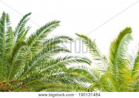 Palm Tree Leafs on the Bright Sky Background. Summer Vacation Concept.