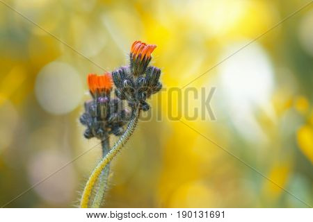 Small orange flowers on a gentle background . The flowers are gently entwined.