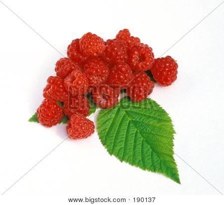 Berries Of A Raspberry